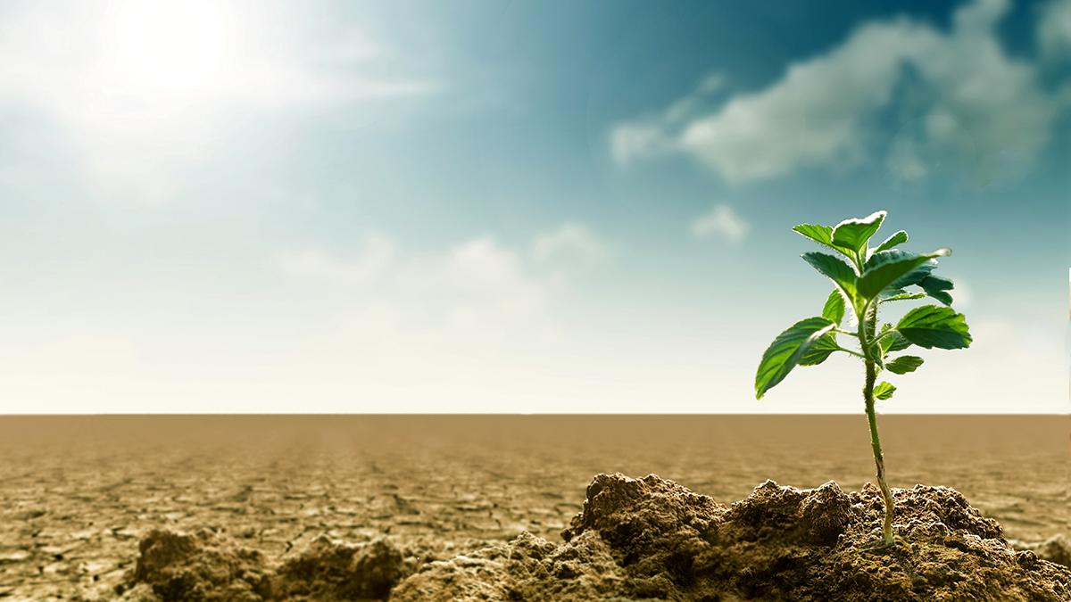 HISPALFORM Día Mundial de Lucha contra la Desertificación y la Sequía